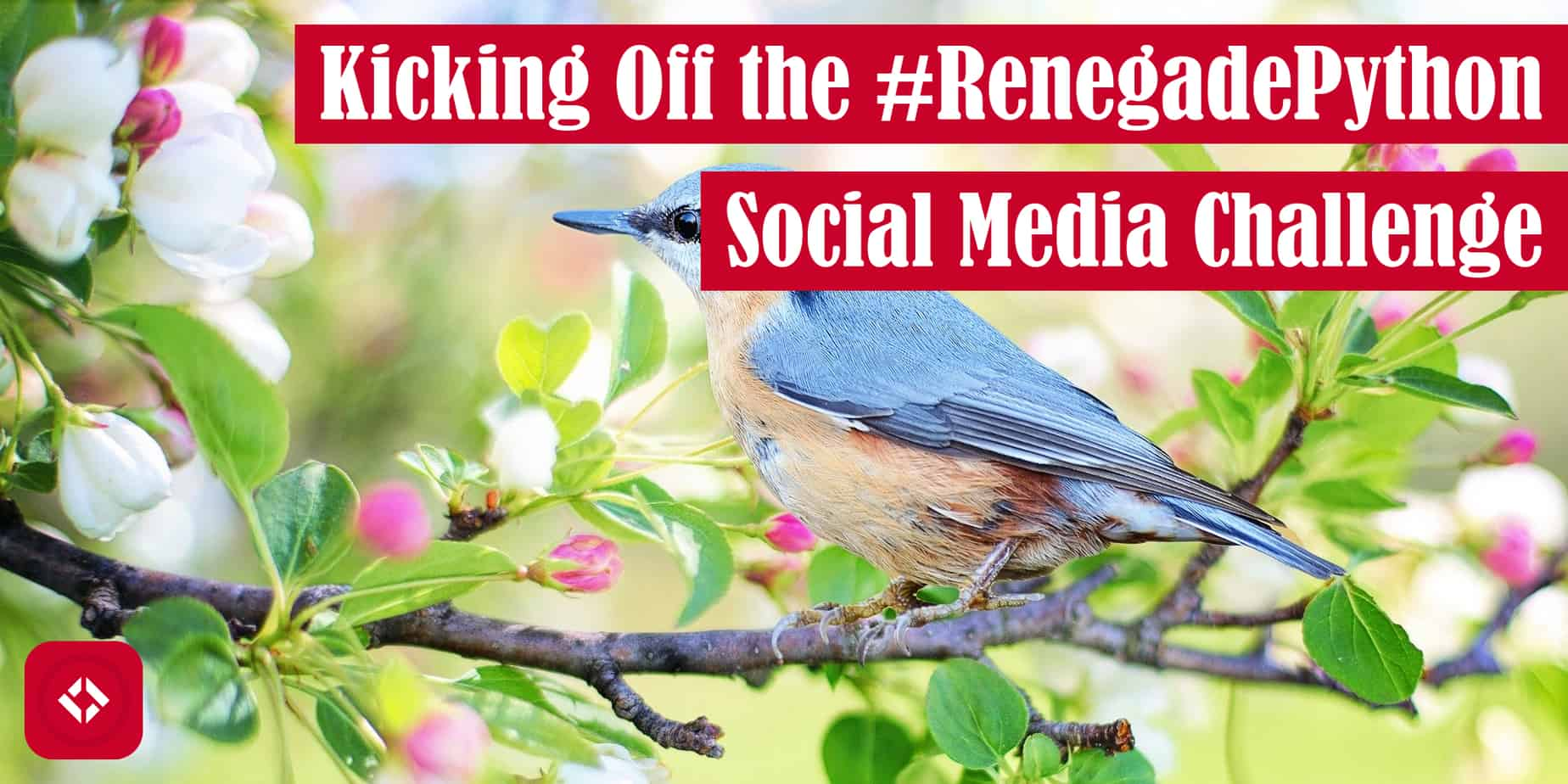 Kicking Off the #RenegadePython Social Media Challenge Featured Image